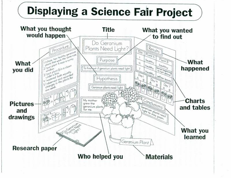 science project display board layout If you are working on a complex or very involved project you may need not only our normal science fair project display boards guide, but also some of the advanced.